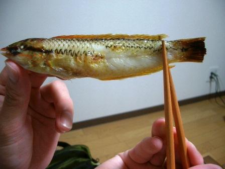 201026焼きキュウセン