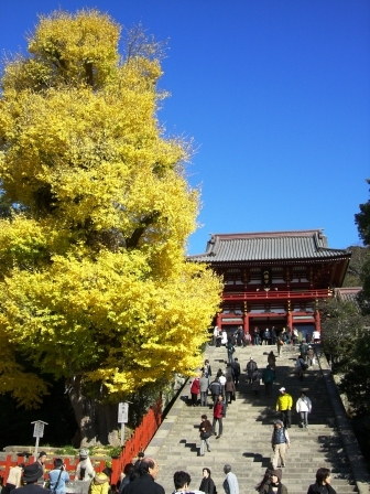 201206鶴岡八幡宮2