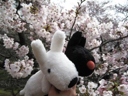 210405桜とリサガス