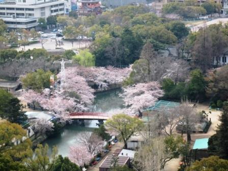 2105405桜