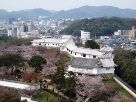 2105405桜3