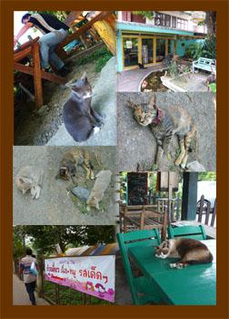 タイの猫_ポッパンク