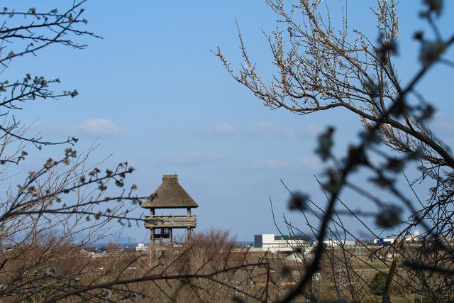 淀江 伯耆古代の丘公園 梅 ポタリング 大山