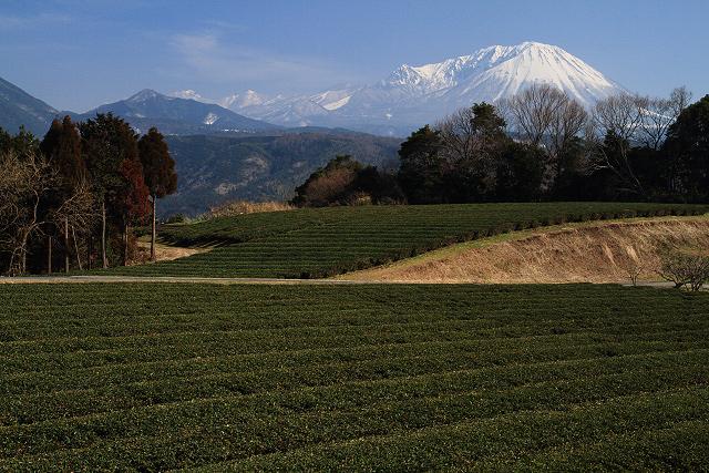 大山の見える風景~壺瓶山より