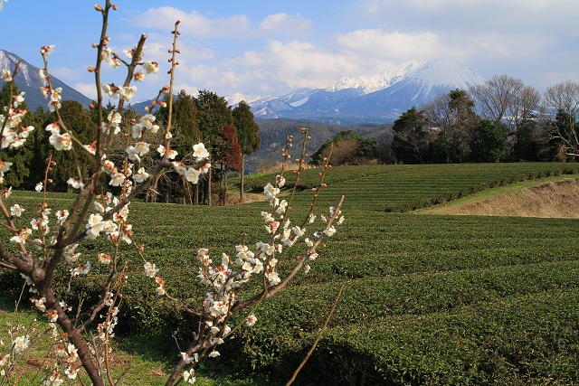 大山の見える風景~淀江町 壺瓶山より梅