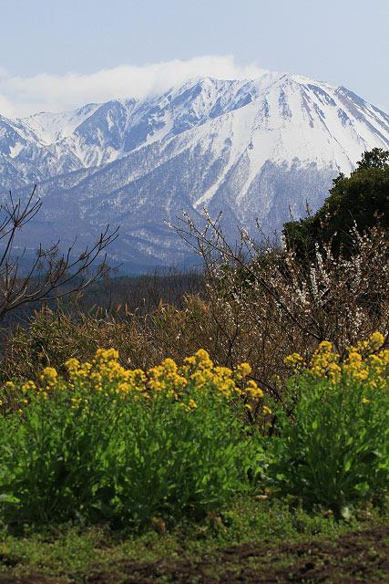 壷瓶山 菜の花 大山