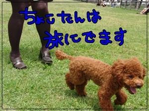 20111207-20110523-1057.jpg