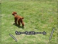 20111207-20110523-1171.jpg