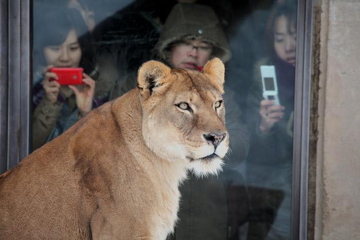 1102ライオン01