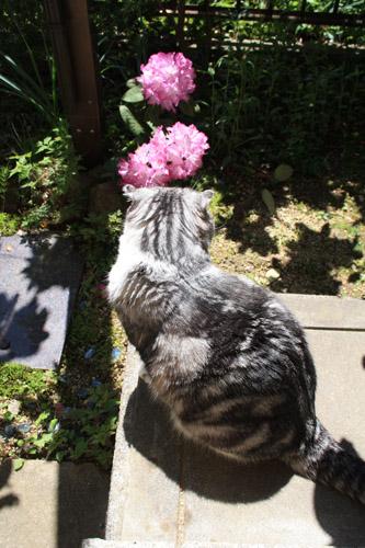 石楠花とマロン。
