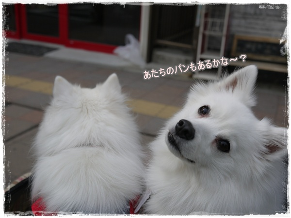 19_20110320173150.jpg