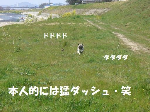 CIMG6563.jpg