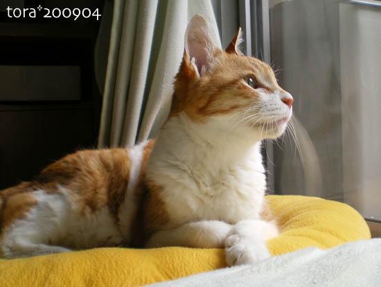tora09-04-03.jpg