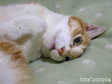 tora09-04-112s.jpg
