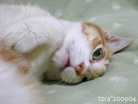 tora09-04-113s.jpg
