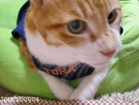 tora09-04-18s.jpg