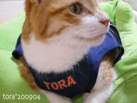tora09-04-19s.jpg