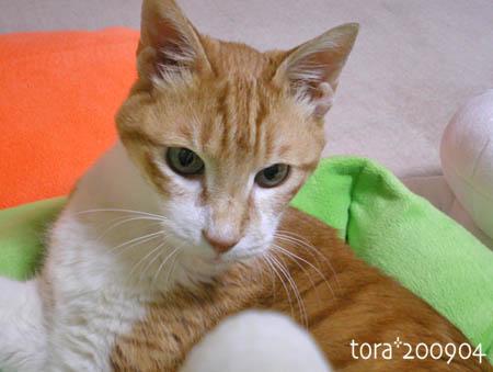 tora09-04-33s.jpg