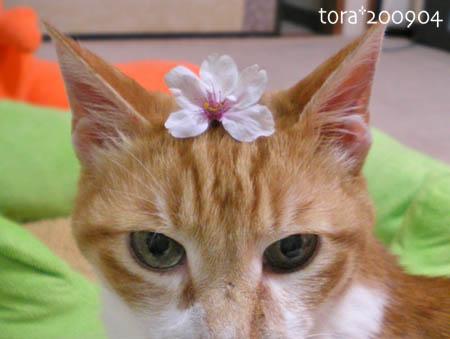 tora09-04-61s.jpg