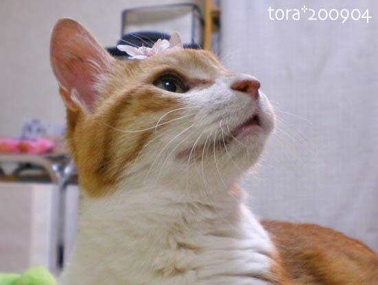tora09-04-67.jpg