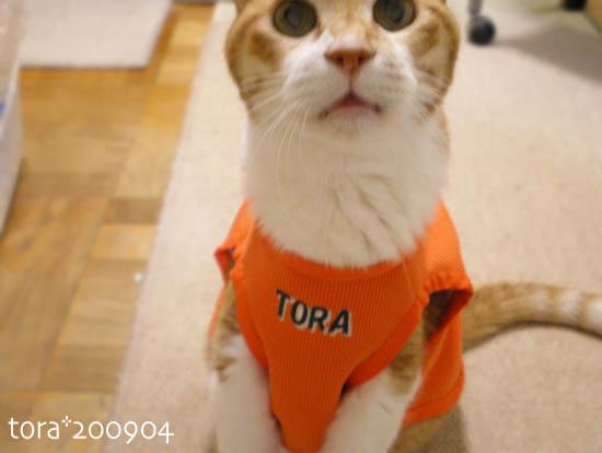 tora09-04-73.jpg