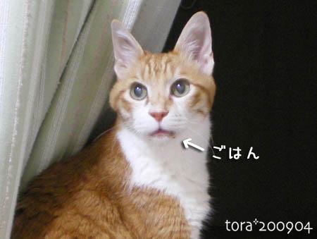 tora09-04-81s.jpg