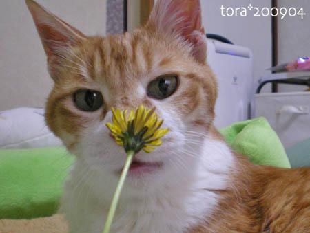tora09-04-86s.jpg