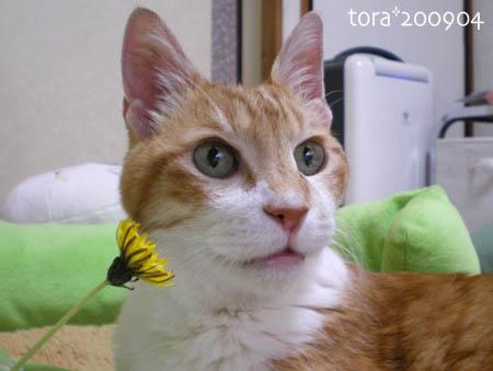 tora09-04-87s.jpg