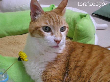 tora09-04-90s.jpg