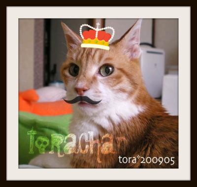 tora09-05-36-x.jpg