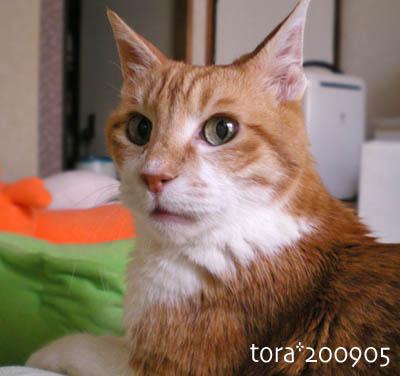 tora09-05-36x.jpg