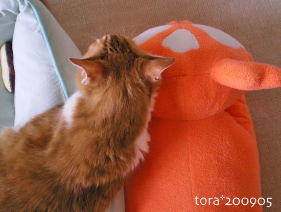 tora09-05-96.jpg