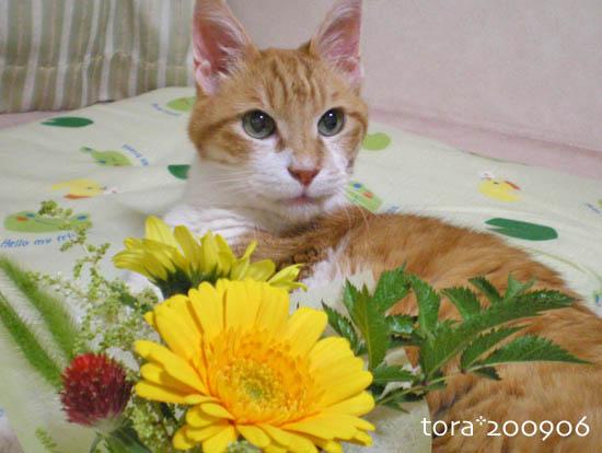 tora09-06-110.jpg
