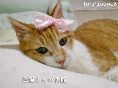tora09-06-164s.jpg