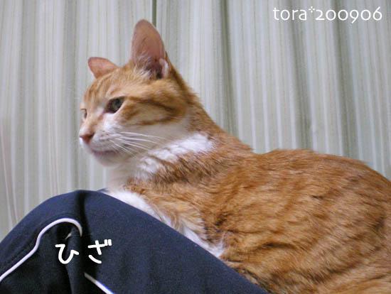tora09-06-21.jpg