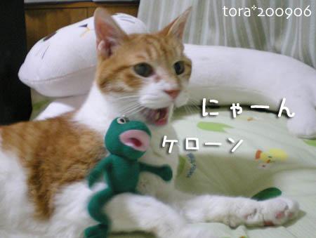 tora09-06-46s.jpg