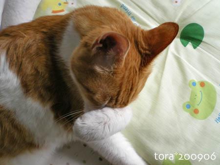 tora09-06-51.jpg