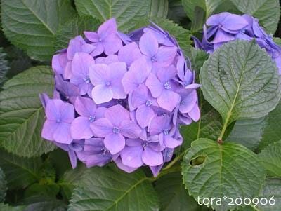 tora09-06-92.jpg