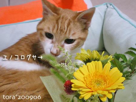 tora09-06-97.jpg