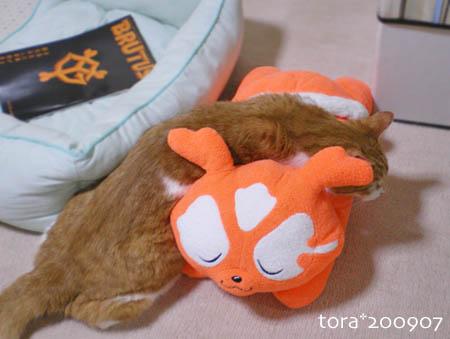 tora09-07-03s.jpg