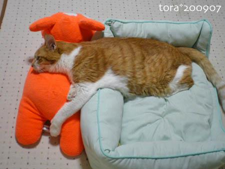 tora09-07-10.jpg