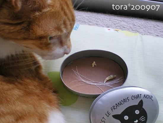 tora09-07-66.jpg