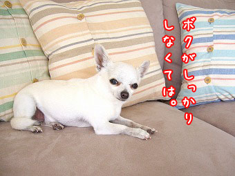 bokugasi.jpg