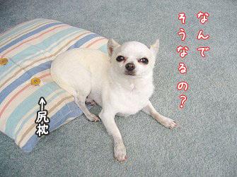 sirimakura22.jpg