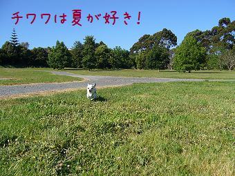 tiwawahanatsu.jpg