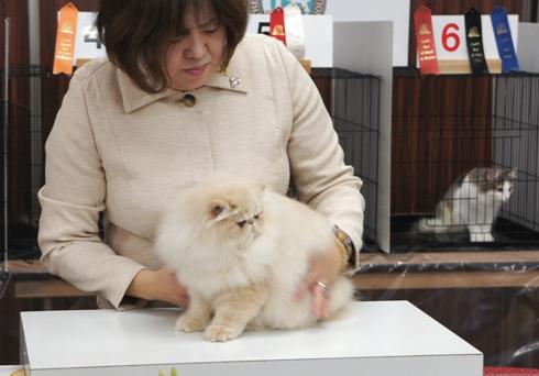 5)キツンのヴァルキリーちゃん