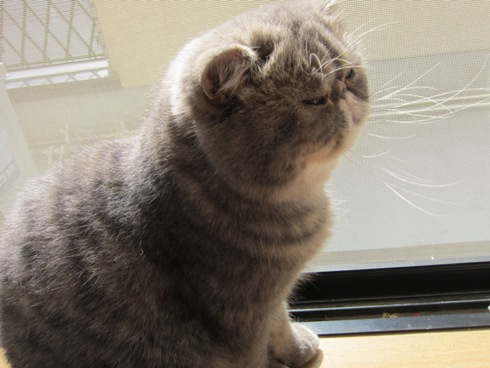 1)窓辺のぷく