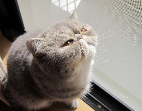 2)太陽に向かってつおいお顔
