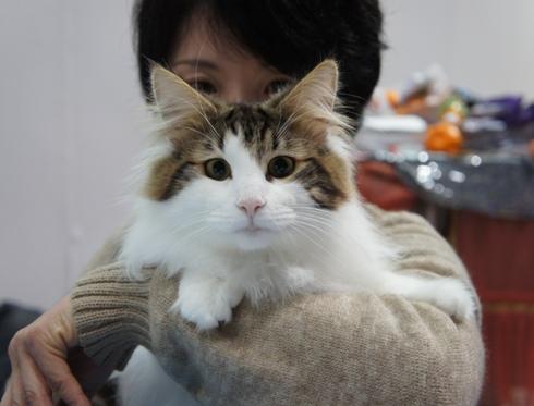 6.9)リーヤちゃんママもかなりの猫顔