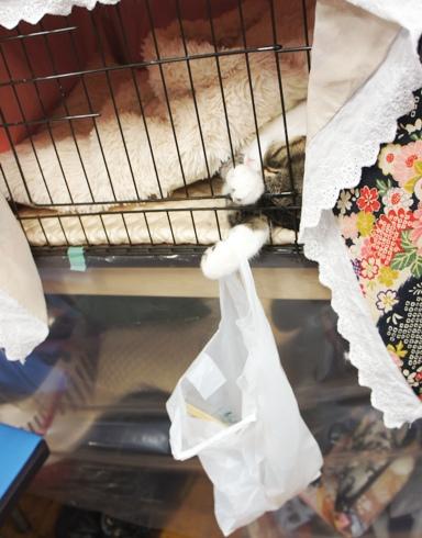 31)猫の手大賞!